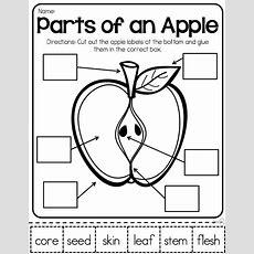 Parts Of An Apple Apple Activities  Teaching Pinterest