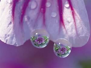 Water drops - Purple Wallpaper (24018913) - Fanpop