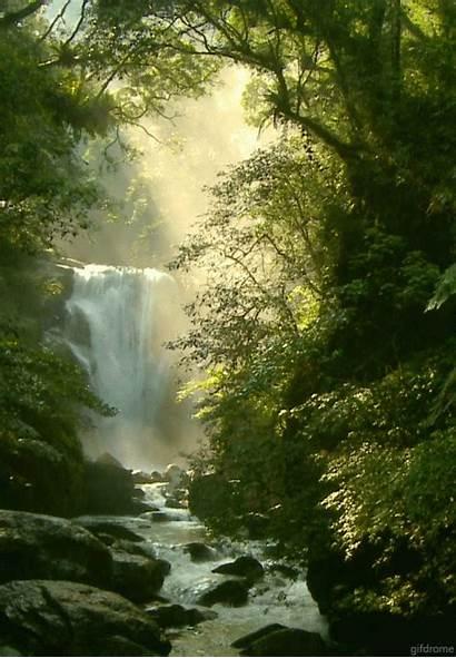 Nature Waterfall Gifs Forest Waterfalls Amazing Woods