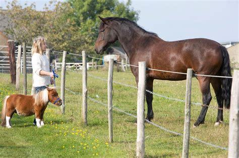 horse smallest dwarfism miniature dwarf dog mini pony britain pet even animal average acer tiny mirror steed livestock rare than