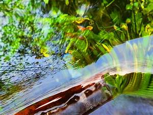 Feng Shui Wasser : kraftplatz lorber quelle in stattegg bei graz ~ Indierocktalk.com Haus und Dekorationen