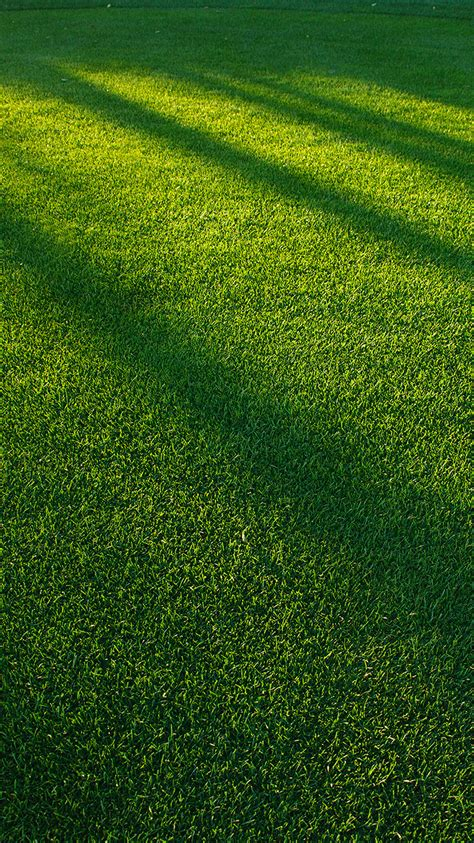 vj lawn grass sunlight green pattern papersco