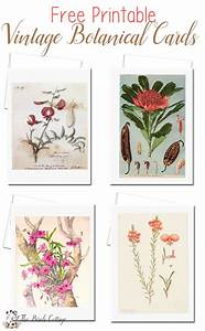 Vintage Botanical Illustration Cards {Set One} | Art to ...