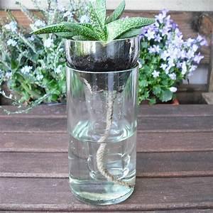 Pflanze In Flasche : die besten 17 ideen zu glasflaschen schneiden auf pinterest wein schneiden bierflaschen ~ Whattoseeinmadrid.com Haus und Dekorationen