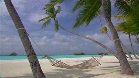 Hammock Between Trees by 10 Hours Maldives Islands Hammock Between Palm Trees