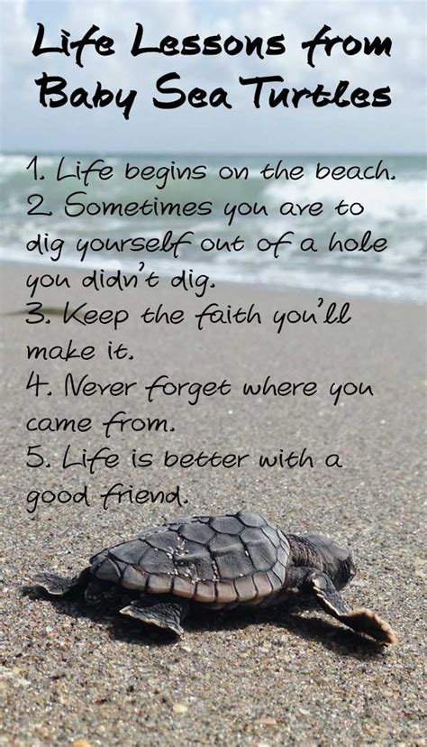 turtle sea turtles baby lessons quotes quote beach sayings motivational daily inspirational wisdom wfpblogs facts short dickinson emily hole ocean