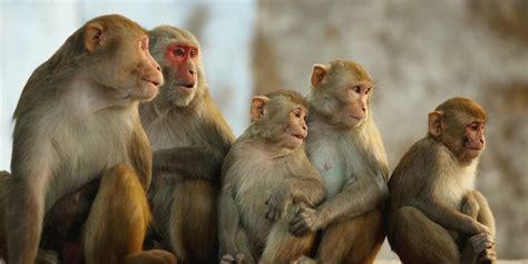 5 Hd Picture by Monkey Wallpaper Hd