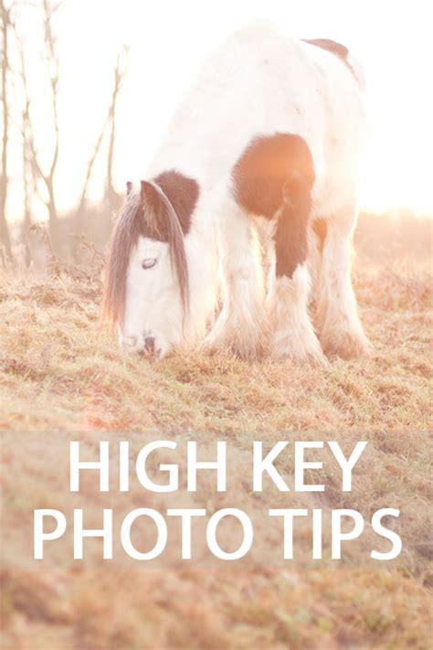 High Key Images High Key Photography Tips Discover Digital Photography