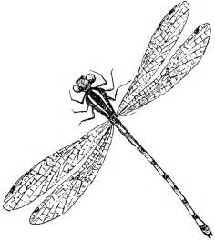 basic outlines of dragonflies dragonfly line drawing clipart best