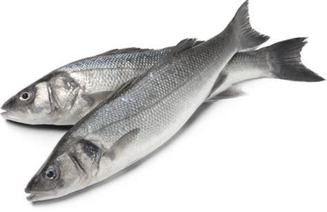 cuisine coquilles jacques poissons et viandes