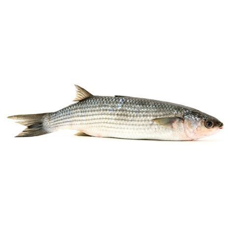 cuisiner les patissons blancs mulet poissons et fruits de mer
