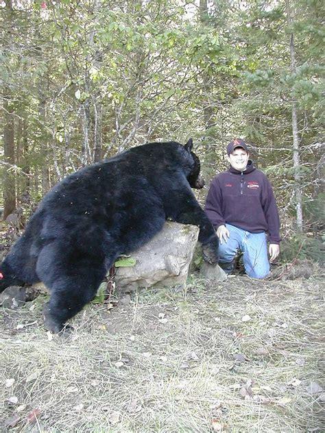 Maine Black Bear Hunting Lodge