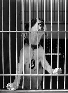 Man Locks Self in Kennel to Help Homeless Animals Pets ...