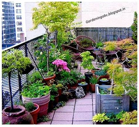 plants for rooftop gardens roof terrace garden plants www imgkid com the image