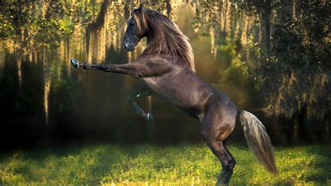 horse wallpaper beautiful hd  wallpaper walldiskpaper