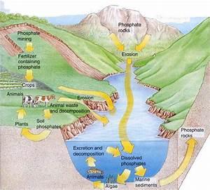 Excess Phosphorus In The Soil