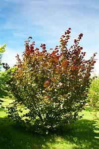 Rote Johannisbeeren Schneiden : rote johannisbeere sorten rote johannisbeere osipovskaya ~ Lizthompson.info Haus und Dekorationen