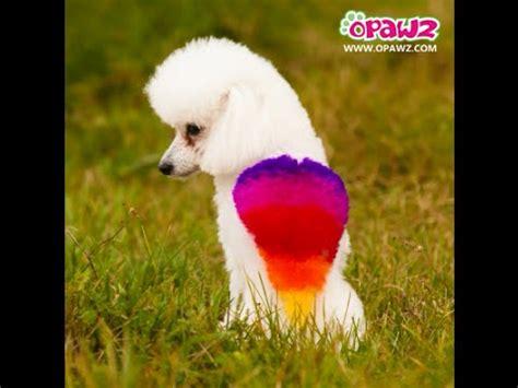 opawz pet hair dye rainbow dog tutorial youtube