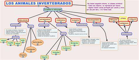 animales invertebrados caracteristicas  clases