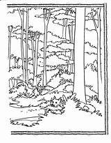 Forest Coloring Pages Habitat Printable Animal Trees Drawing Tall Tree Habitats Adult Jungle Books Nature Landscape Winter Visual Arts Getdrawings sketch template