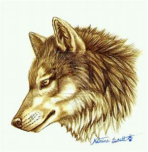 Wolf Head Drawing Side
