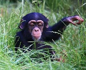 KS1 Animals | Carnivores, Herbivores and Omnivores