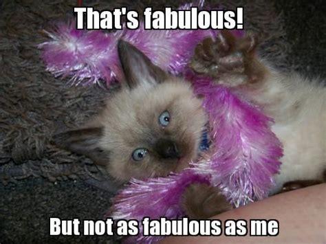 Fab Meme - fabulous meme www imgkid com the image kid has it