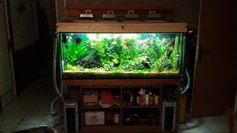 plantes aquarium sans sol nutritif