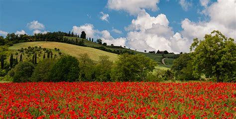 desktop hintergrundbilder toskana italien natur mohn acker