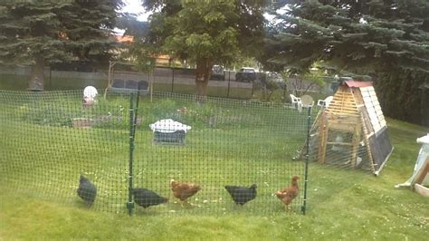 chicken coop ideas cheap chicken fence run