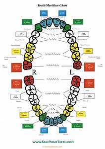 Tooth  U2013 Dental Meridian Chart