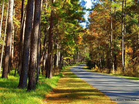 Three Rivers State Park | Florida State Parks