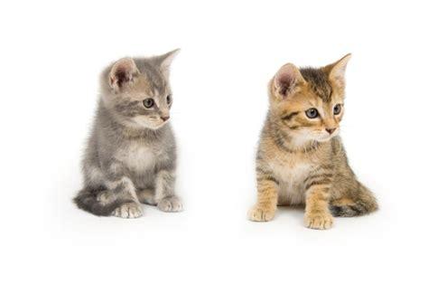 cool cat names our 15 coolest unique cat names you haven t heard before