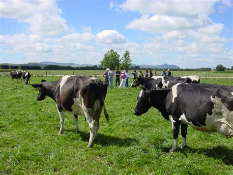 dairy farm consultancy management nutrition healthdpsl