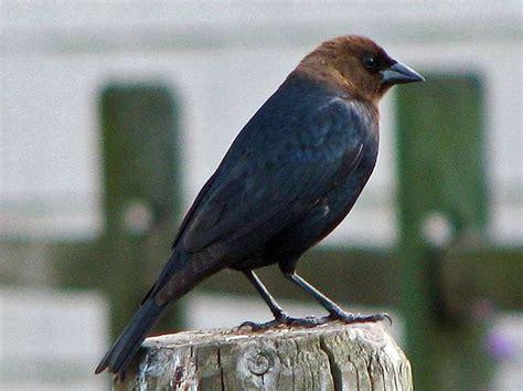 unusual strange and weird birds of north carolina