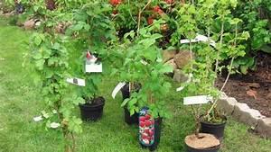 Was Kann Man In Ein Gewächshaus Pflanzen : beerenstr ucher pflanzen pflegen und schneiden ~ Lizthompson.info Haus und Dekorationen