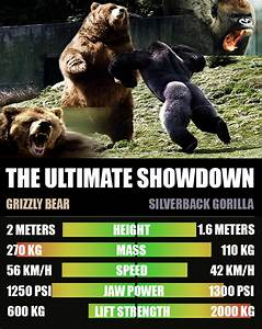 The gallery for --> Gorilla Vs Bear