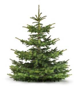 Tannenbaum Christmas Tree by Weihnachtsbaum Fichte Picea Abies Christbaum G 252 Nstig