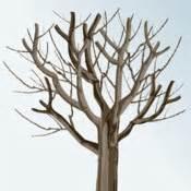 Comment Tailler Un Pommier : taille de rajeunissement pour un arbre fruitier ooreka ~ Dode.kayakingforconservation.com Idées de Décoration