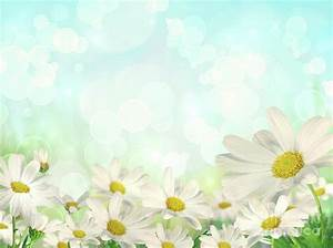 Spring Background With Daisies Photograph by Sandra Cunningham