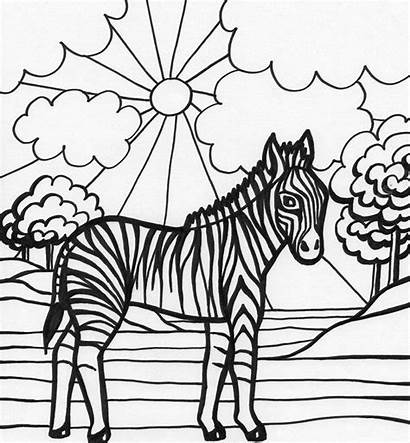 Zebra Coloring Pages Zebras Template Animal Printable