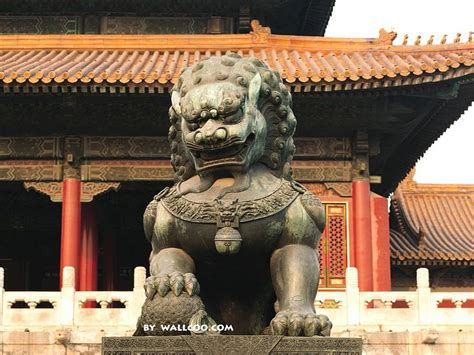 bronze statue   lion   forbidden city beijing