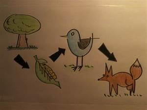 Un dibujo de la cadena alimenticia Imagui