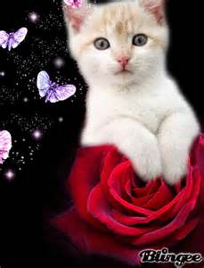 picture of cats cat roses picture 129715774 blingee