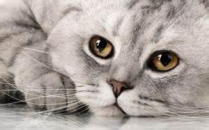 Bestes Trockenfutter Für Katzen : trockenfutter f r katzen im test 2019 test ~ A.2002-acura-tl-radio.info Haus und Dekorationen