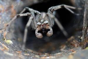 Meet Australia39s Deadliest Animals