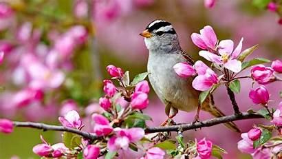 Spring Bird Desktop Birds Flowers Nature Wallpapers
