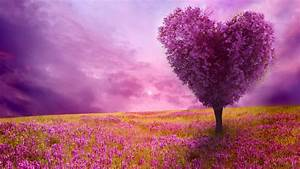 spring wallpaper and screensavers hd 70 images With katzennetz balkon mit fantasy fields magic garden