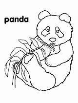Coloring Pages Panda Pandas Bears Bear Hibernation Bamboo Eating Printable Children Animal Animals Colouring Wood Ones Crafts Burning Kindergarten Pre sketch template