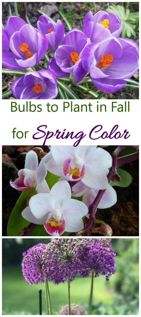 bulbs to plant in fall get blooming bulbs in